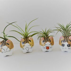 Other - Ceramic Cat Planters with Air Plants, set of 4